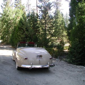 '47 in Sequoias - rear view