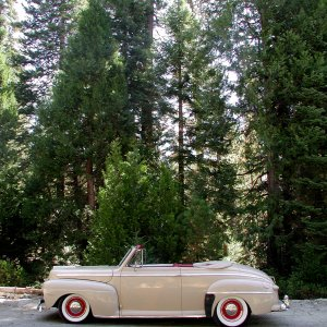'47 in Sequoias - side view
